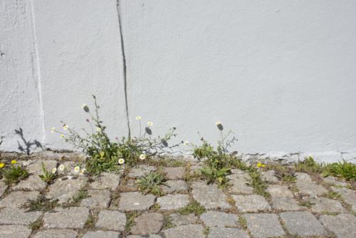 Adèle-Wypolsz-07